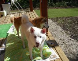 ログハウスと犬の写真